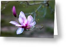 Spring's Bloom Greeting Card
