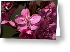 Springs Bloom Greeting Card