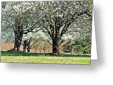 Spring's Canopy Greeting Card