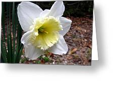 Spring's First Daffodil 1 Greeting Card