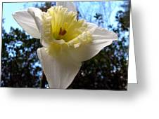 Spring's First Daffodil 2 Greeting Card