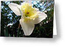 Spring's First Daffodil 3 Greeting Card