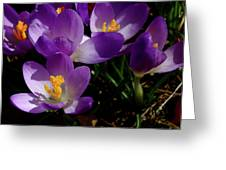 Springs First Flowers Greeting Card