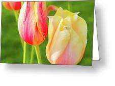 Spring's Garden Greeting Card