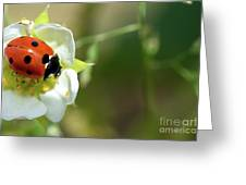 Springtime - Animals Greeting Card