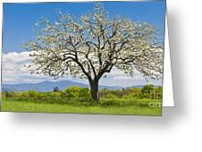 Springtime Apple Tree Panorama Greeting Card