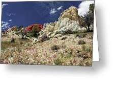 Springtime At Red Rock Canyon Greeting Card