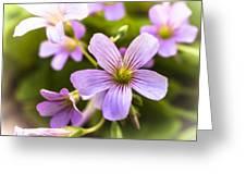 Springtime Blooms Violet Wood Sorrel 3 Greeting Card