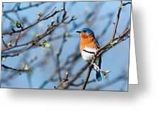 Springtime Blue Greeting Card