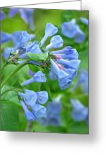 Springtime Bluebells  Greeting Card by Lori Frisch