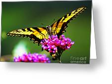 Springtime Butterfly Greeting Card