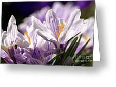 Springtime Color Greeting Card