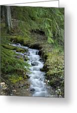 Springtime Creek Greeting Card