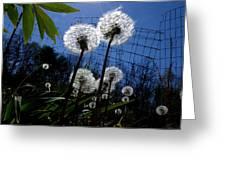 Springtime Dandylions Greeting Card