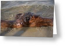 Springtime Driftwood Greeting Card