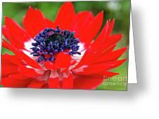 Springtime - Flowers Greeting Card