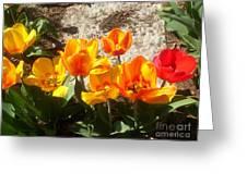 Springtime Flowers Greeting Card by Rachel Maynard