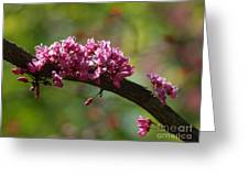 Springtime Forest Pansy Redbud Branch Greeting Card