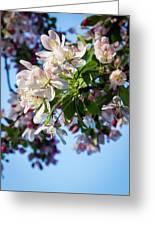 Springtime In Bloom Greeting Card