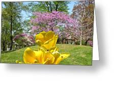 Springtime In Bridgeton Missouri Greeting Card