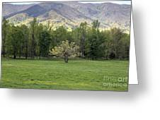 Springtime In Cades Cove Great Smoky Mountains National Park Greeting Card