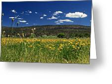 Springtime In Hat Creek Greeting Card