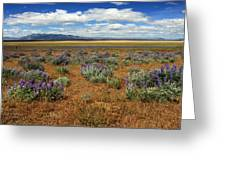 Springtime In Honey Lake Valley Greeting Card by James Eddy