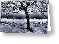 Springtime In Infrared Greeting Card