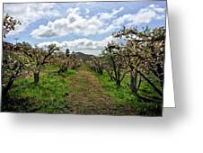 Springtime In The Apple Grove Greeting Card