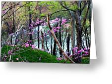 Springtime In The Mountains 2 Greeting Card