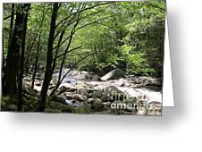 Springtime In The Smoky Mountains Greeting Card