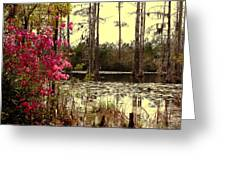 Springtime In The Swamp Greeting Card