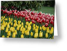 Springtime In Washington Greeting Card