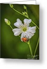 Springtime Ladybug Greeting Card