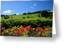 Springtime Landscape Greeting Card