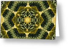 Springtime  Mandala Greeting Card