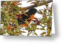 Springtime Oriole Greeting Card