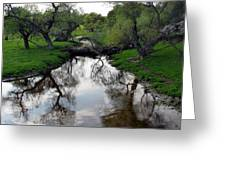 Springtime Reflections Greeting Card