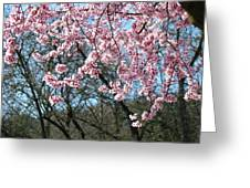 Springtime Seasonal Pink Blossom Flowers Baslee Greeting Card