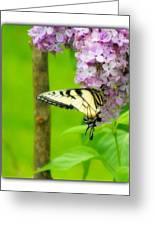 Springtime Splendor Greeting Card