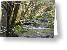 Springtime Stream In The Smokies Greeting Card