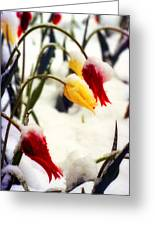 Springtime Tulips In The Snow Poster Print Greeting Card
