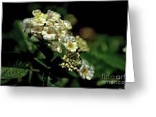Sprinkles On Lantana Flower Greeting Card