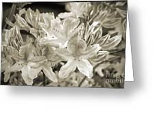 Sprint Flowers B/w 1 Greeting Card