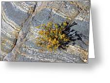 Sprouting Rock Greeting Card