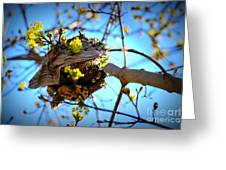 Sprouting Wasp Net Greeting Card