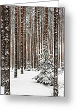 Spruce Among The Pines Greeting Card