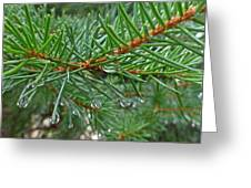Spruce Drops Greeting Card