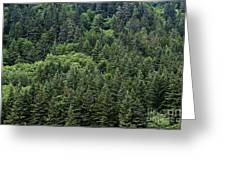 Spruce Forest Greeting Card