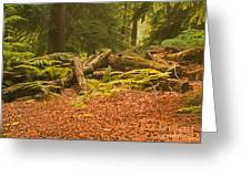 Spruce Logs Leith Hill Surrey 2014 Greeting Card